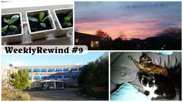 WeeklyRewind9